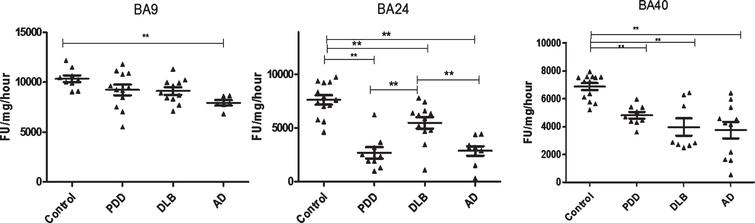Analysis of PGPH-like activities in brain homogenates from BA9, BA40, and BA24 of DLB, PDD, AD, and controls. Scatter plots are shown of PGPH-like activity measurement in BA9, BA40, and BA24 homogenates from DLB, PDD, AD, and normal control samples using the fluorogenic substrate assay. Activities are expressed as fluorescence units (FU)/mg protein/hour. BA9: PGPH-like activity was significantly decreased only in AD patients (p=0.012, n=6) compared with the control (n=9); DLB and PDD groups were lower compared with the control subjects, but there was no statistically significant difference between them. The values for the ANOVA for PGPH-like activity measurement in BA9 were: F=7.897, d.f.=3, 34, p=0.001). BA40; the differences between the patients' groups (PDD, DLB, and AD) and the control were statistically different (one-way ANOVA, F=10.263, d.f.=3 and 42, p=0.001;). The reduction in PGPH-like activity was higher in the AD group with a mean±SEM value of 3741.8±587.5, n=11, compared with 1.28±0.028, n=24 for the controls. The reduction in both DLB and PDD were also significant with a mean±SEM value of 4133.7±640, n=10 and 4809±240, n=9 compared with control (Bonferroni post hoc test). In BA24, there was a significant difference between DLB (p=0.013, n=12), PDD (P=0.001, n=9) and AD (P=0.001, n=9) compared with the control (n=13) (one-way ANOVA, F=23.087, d.f.=3 and 39, p=0.001; Bonferroni post hoc test). PGPH-like activity measurements were significant lower in both AD (p=0.004, n=9) and PDD (p=0.002, n=9) compared with DLB subjects. The horizontal bars within the data points in the graphs represent the mean values. (**p < 0.01).
