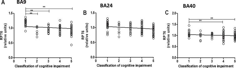 Relationship between RPT6 expression levels and cognitive impairment based upon MMSE classification. 19S ATPase RPT6, proteasome sub-unit values protein levels in BA9, BA24, and BA40 predicted cognitive impairment. Regression analysis showed RPT6 levels in BA9, BA24, and BA40 of control, DLB, PDD, and AD to be significant predictors of the cognitive impairment category ([BA9] R2 = 0.297, beta = –0.545, degree of freedom [df] = 1, 102, t = –6.571, p = 0.001, [BA24] R2 = 0.04, beta = –0.206, df = 1, 99, t = –2.09, p = 0.039, [BA40] R2 = 0.180, beta = –0.425, df = 1, 105, t = –4.807, p = 0.001]. The analysis of variance (ANOVA) for the model was significant (p = 0.0001). The difference in mean RPT6 levels between cognitive impairment groups was analyzed by one-way ANOVA and the Bonferroni post hoc test, which revealed RPT6 levels in BA9 to be significantly higher in controls compared with the other groups (one-way ANOVA F = 17.82, d.f.  = 4 and 99, p = 0.001; Bonferroni post hoc test). In BA40, RPT6 levels were significantly lower in people with moderate dementia (10%, p = 0.033) and with severe dementia (19%, p = 0.001) compared with controls. The difference in mean RPT6 levels between cognitive impairment groups in BA24 was not found to be significant (one-way ANOVA p > 0.05). (**p < 0.01).