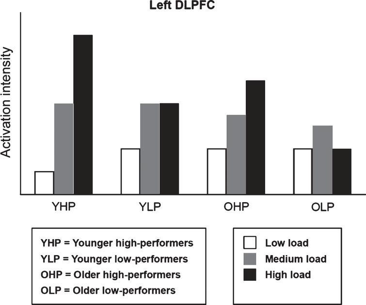 Hypothetical model of left dorsolateral prefrontal cortex (DLPFC) activation modulated by age and performance level (particularly based upon the results of Nagel et al. [69] and Bauer et al. [86]). The bar chart indicates a flexible upregulation of DLPFC activation in YHP as neural response to increasing load. OHP show a similar though less differentiated pattern indicating a flexible recruitment of neural resources similar to that of YHP. By contrast, neural resources appear to be exhausted at medium or low load in YLP, and OLP respectively. Please notice that qualitative group differences are shown; exact quantitative relations were not considered.