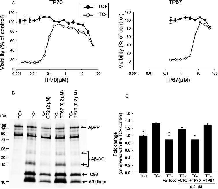 The neuroprotective effects of TP70. A) MC65 cells were induced to express AβO by withdrawal of tetracycline (TC-) from the medium in the presence of indicated concentrations of TP70 or TP67. Cultures in the presence of TC (TC+) as well as the drug were used as controls to determine the toxicity of the drug independent of Aβ. At 72 h, viability was assessed by MTT assay. Data are expressed as mean percentage viability (n=3) with parallel TC+ cultures without drug set at 100% viability. Error bars represent standard error. The EC50, TD50, and TI values of TP70 were calculated and listed in Fig. 1. B) MC65 cultures at 24 h after TC withdrawal were homogenized and 5 μg cellular proteins were subjected to Tris/tricine SDS-PAGE and western blot analysis with antibody 6E10 for Aβ1-16. The band pattern was comparable to our published data [8, 38]; accordingly, each band was identified. Both CP2 and TP70, but not TP67, reduced the levels of Aβ-OC, C99, and Aβ dimer without altering the level of AβPP. C) Fluorescence intensity of each culture conditions were expressed as fold change compared to the TC+ (no Aβ expression) condition. n=7-8, *p<0.05 compared to the TC- condition (with Aβ expression). TP70 and α-tocopherol but not CP2 or TP67 reduced ROS levels related to intracellular Aβ expression. Data are expressed as mean percentage viability (n 1/4 7) with parallel +TC cultures set at 100% viability. Error bars represent standard error.