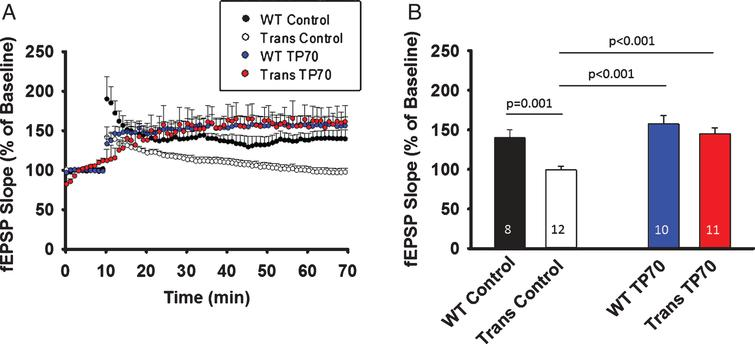 TP70 treatment mitigates hippocampal LTP deficits in 5xFAD mice. 5xFAD (Trans) mice and WT littermates at 15-16 months of age were intraperitoneally injected either 25 mg/kg TP70 or equal volume of vehicle. The mice were sacrificed 24 h later and hippocampal slices obtained for recording. A) Traces and time course of LTP induction showing that TP70 treatment of 5xFAD mice enhanced the amplitude of LTP to the levels not different from those of WT mice. B) Summary bar plot showing the average fEPSP slope at 45 min after high frequency stimulation. Data were compiled from recordings using slices obtained from 3 mice per group. The number within each bar indicates the number of slices used for recording.
