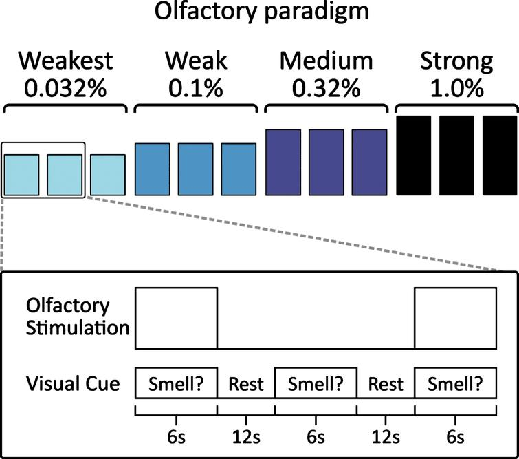 "The visual-odor association fMRI paradigm. The paradigm consists of interleaved ""odor"" and ""no-odor"" conditions. For the odor conditions, the visual cue was a display of the word ""Smell?"" when lavender odor was presented at the same time. For the no-odor conditions, only odorless air was given when the same visual cue appeared on the screen. When ""Smell?"" appeared on the screen, the subject provided responses using a button press device in each hand, with the left hand if they detected no smell and the right hand if they detected the odor. Four concentrations of lavender were presented. Each concentration was presented three times before the next higher concentration was presented in a stepwise fashion. Odor presentation started with the weakest concentration and ended with the strong concentration."