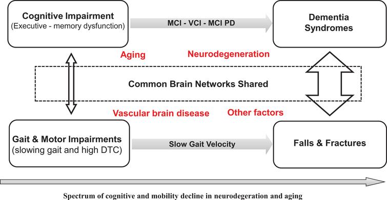 Potential mechanism affecting the common brain structures and networks that regulate gait control and cognitive performance. Adapted from Montero-Odasso et al. [5].
