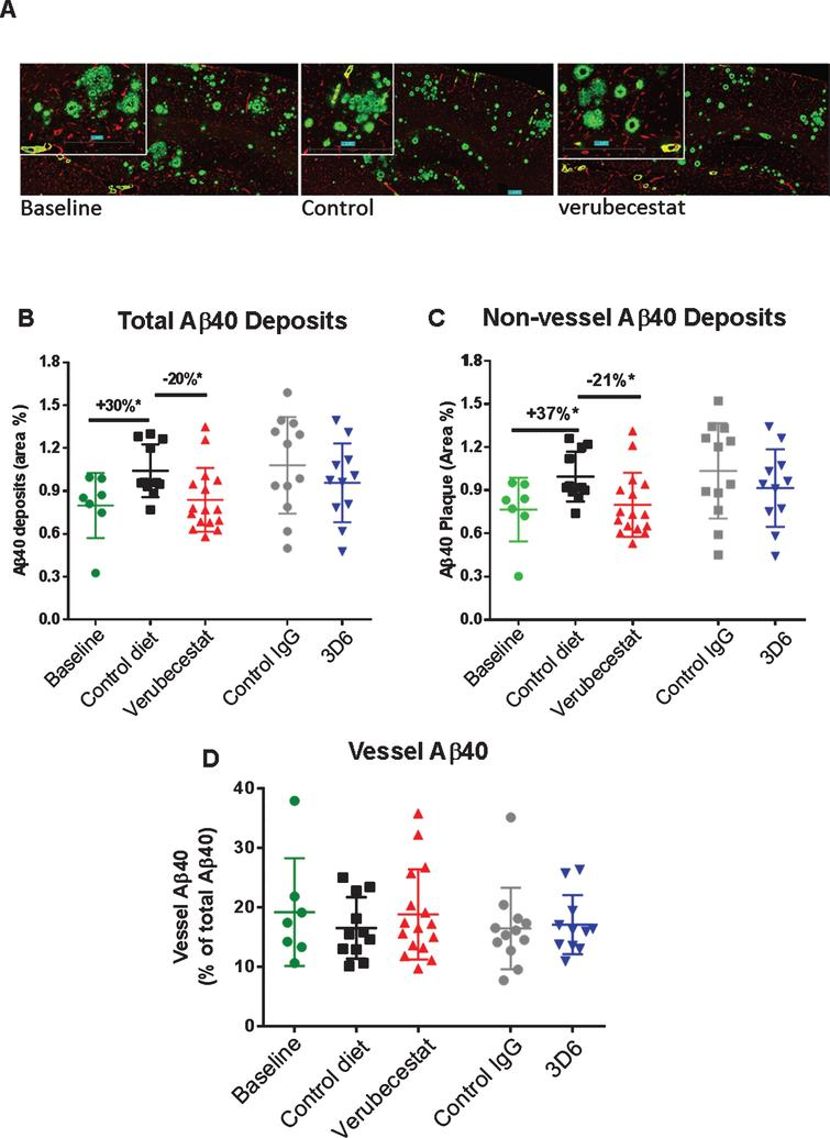 Analysis of total, non-vessel and vessel-associated anti-Aβ40 reactive deposits. A) Representative images of baseline (left), control (vehicle) diet-treated (middle), and verubecestat-treated mouse stained with the C-terminal specific anti-Aβ40 antibody, G2-10 (green) and with an anti-collagen IV antibody to label all blood vessels (red). Scale bar=500 microns. Magnified insets are to allow for closer inspection of staining profiles. B) Fractional area of total Aβ40-immunoreactive deposits. C) Fractional area of non-vessel Aβ40 deposits determined by subtraction of the area of Aβ40 co-localized with collagen IV positive pixels from the total Aβ40 area and normalized to the total area of the region analyzed. D) The fraction of the Aβ40 deposits associated with vessels as defined by co-localization with collagen IV positive pixels. *p<0.05, two-tailed t-tests (pairwise). Data are mean±sd.