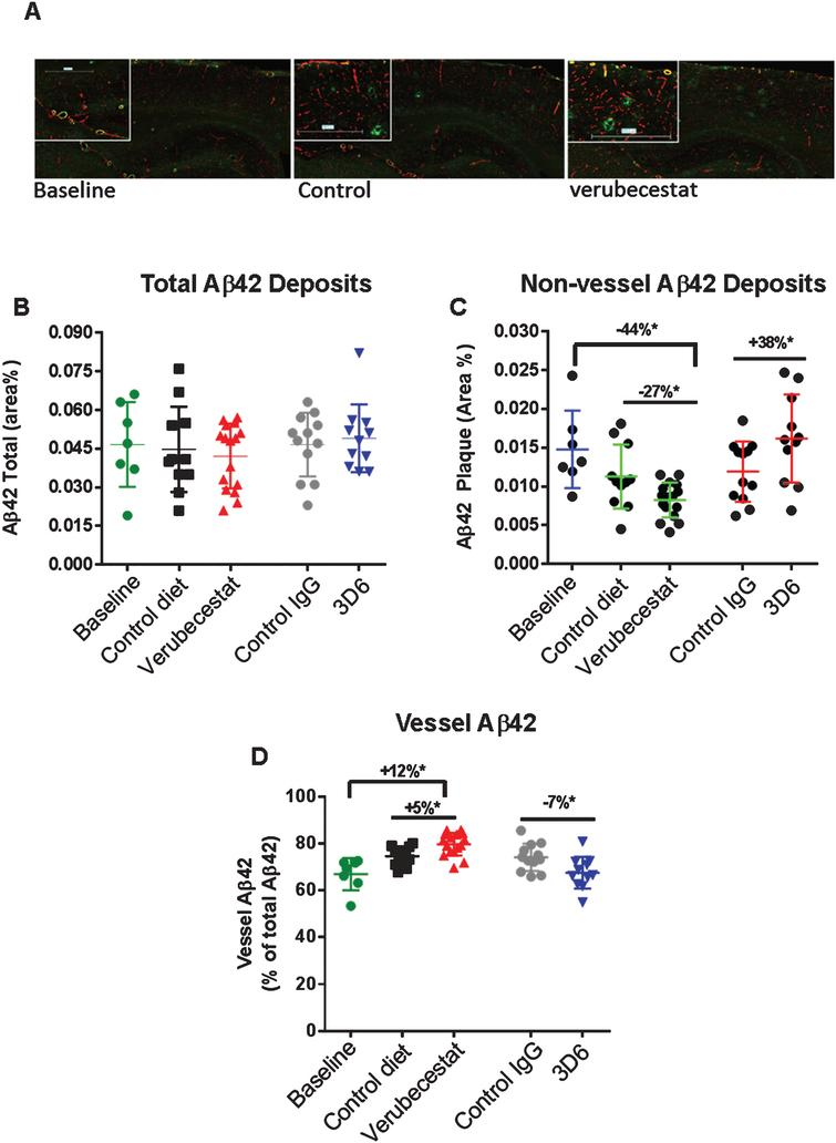 Analysis of total, non-vessel and vessel-associated Aβ42 deposits. A) Representative images from a baseline (left), control (vehicle) diet-treated (middle), and verubecestat-treated mouse stained with the C-terminal specific anti-Aβ42 antibody, G2-11 (green) and with an anti-collagen IV antibody to label all blood vessels (red). Scale bar=500 microns. Magnified insets are to allow for closer inspection of staining profiles. B) Fractional area of total Aβ42-immunoreactive deposits. C) Fractional area of non-vessel Aβ42-immunoreactive deposits determined by subtraction of the area of Aβ42 staining co-localized with collagen IV positive pixels (defined as vessel-associated Aβ42) from the total area of Aβ42-reactivity. D) Fraction of the total Aβ42 deposits associated with vessels. Aβ42 reactive areas were normalized to the area of the total region analyzed. *p<0.05 (two-tailed t-tests, pairwise). Data are means±sd.