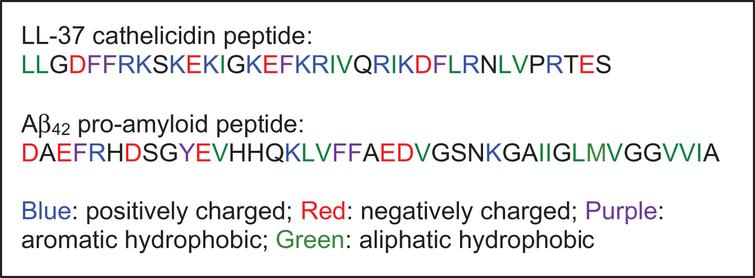 Amino acid sequences: human cathelicidin peptide LL-37 (so named because it comprises 37 amino acids) and the human amyloid-β peptide, Aβ42.