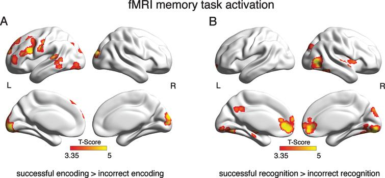 Brain areas that showed significant activation in the GLM analysis of the fMRI memory task. Depicted are clusters where brain activation was significantly greater during successful than incorrect encoding (A) or recognition (B) at a voxel threshold of α= 0.001 and a FWE corrected cluster threshold at α= 0.05.