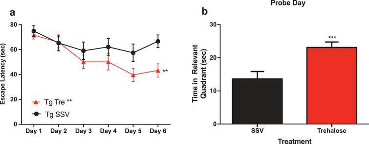 Trehalose treatment improves cognitive performance of Tg2576 mice in the Morris water maze. Two-way repeated measures ANOVA (++p<0.0081) revealed a significant decrease in escape latency for Tg2576 trehalose treated mice compared to Tg2576 SSV treated litter mate controls over the course of the trial (Fig. 1a). A Bonferroni's post-hoc analysis further revealed a significant decrease in latency for trehalose treated mice on day six (*p=0.0233). Two-tailed t-test revealed a significant (***p<0.0003) increase in time spent in the relevant quadrant for trehalose treated Tg2576 mice compared to SSV treated Tg2576 control littermates on probe day (Fig. 3b).