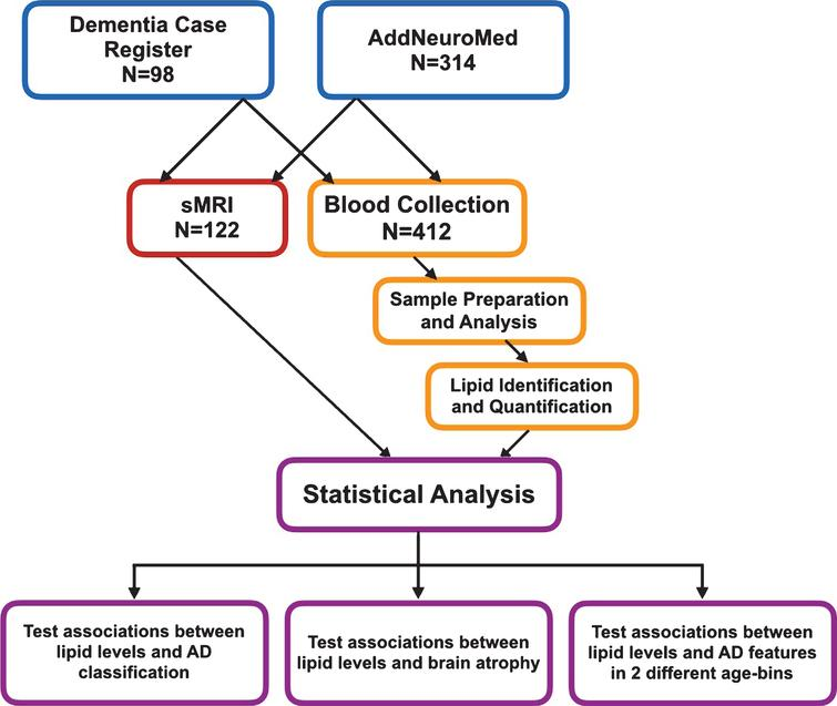 Workflow of this study sMRI, structural magnetic resonance imaging.