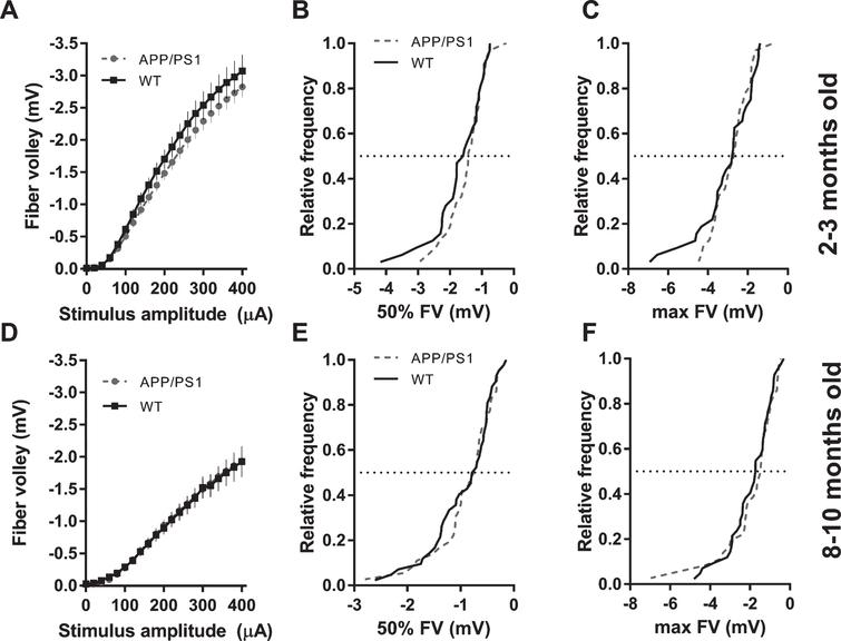 Activation (fiber volley amplitudes) of Schaffer collaterals in CA1 area in APP/PS1 mice. A) FV amplitudes plotted against stimulus amplitude from 2-3-month-old mice (WT n=32 slices from 10 animals; APP/PS1 n=31 slices from 10 animals; (2-way ANOVA; genotype: F(1, 1281)=1728, p<0.0001; stimulus amplitude: F(20, 1281)=114.2, p<0.0001; interaction: F(20, 1281)=0.267, p=0.995;). B) Cumulative distribution histogram of FVs elicited with a 50% stimulus amplitude (200μA) in 2-3-month-old animals (K-S test, D=0.1784, p=0.6978). C) Cumulative distribution histogram of FVs elicited with a 100% stimulus amplitude (400μA) in 2-3-month-old animals (K-S test, D=0.1563, p=0.8367). D) FV amplitudes plotted against stimulus amplitude from 8–10-month-old mice (WT n=42 slices from 10 animals; APP/PS1 n=36 slices from 9 animals; (2-way ANOVA; genotype: F(1, 1592)=0.068, p=0.7943; stimulus amplitude: F(20, 1592)=64.19, p<0.0001; interaction: F(20, 1592)=0.0241, p>0.9999;). E) Cumulative distribution histogram of FVs elicited with a 50% stimulus amplitude (200μA) in 8–10-month-old animals (K-S test, D=0.1667, p=0.6545). F) Cumulative distribution histogram of FVs elicited with a 100% stimulus amplitude (400μA) in 8–10-month-old animals (K-S test, D=0.1627, p<0.6839).