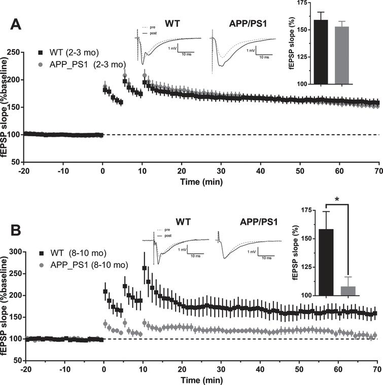 Long-term potentiation in APP/PS1 mice. A) Average baseline-normalized time course of long term potentiation of fEPSP slope in response to high frequency stimulation in 2-3-month-old APP/PS1 mice. Example traces represent averaged responses (4 traces) before HFS and at 60min post last HFS bout. (Inset). Averaged normalized response from the last 5min of recordings (WT n=31 slices from 10 animals; APP/PS1 n=30 slices from 9 animals; two-tailed t-test p=0.4819). B) Average baseline-normalized time course of long-term potentiation of fEPSP slope in response to high frequency stimulation in 8–10-month-old APP/PS1 mice. Example traces represent averaged responses (4 traces) before HFS and at 60min post last HFS bout. (Inset). Averaged normalized response from the last 5min of recordings (WT n=12 slices from 6 animals; APP/PS1 n=11 slices from 7 animals; two-tailed t-test p=0.0107).