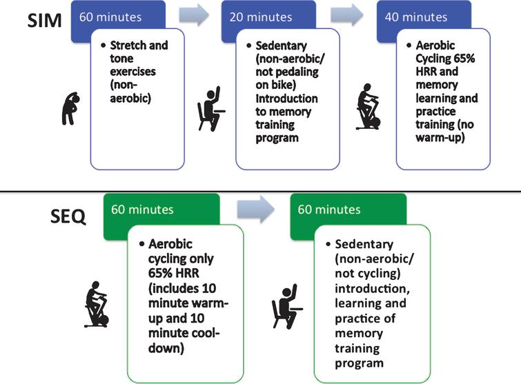 Composition of the small group, trainer led, simultaneous (SIM) exercise and memory training or sequential (SEQ) exercise then memory training, 2-hour training sessions.