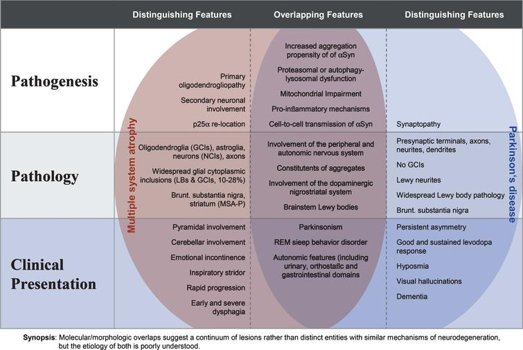 Overlapping and distinguishing features of MSA and PD at the pathogenic, neuropathologic and clinical level (modified from [22]).