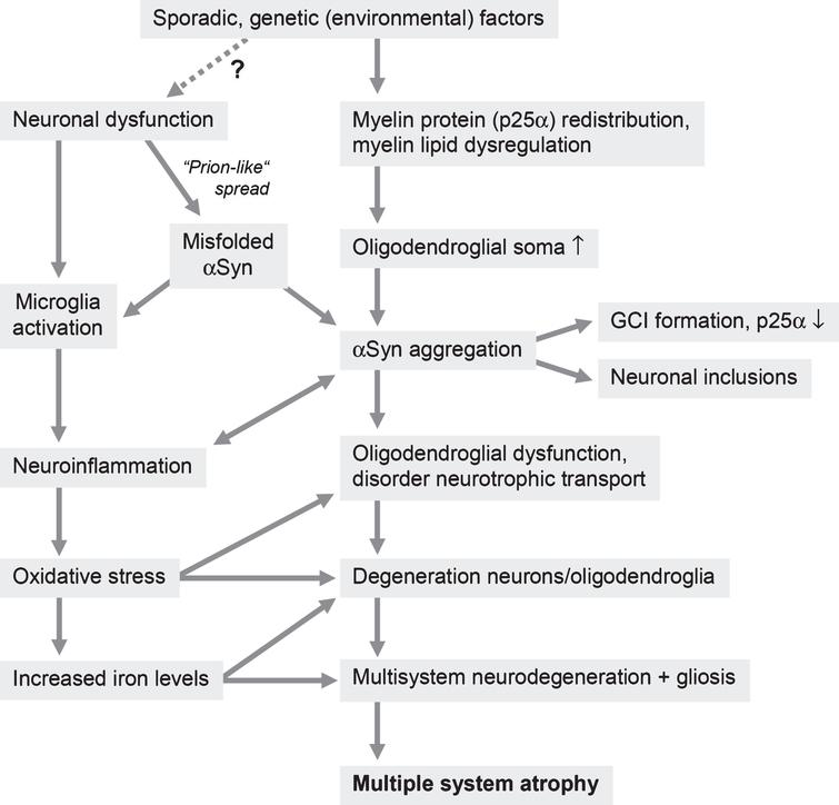 Putative pathogenic pathways of MSA (modified from [502]).