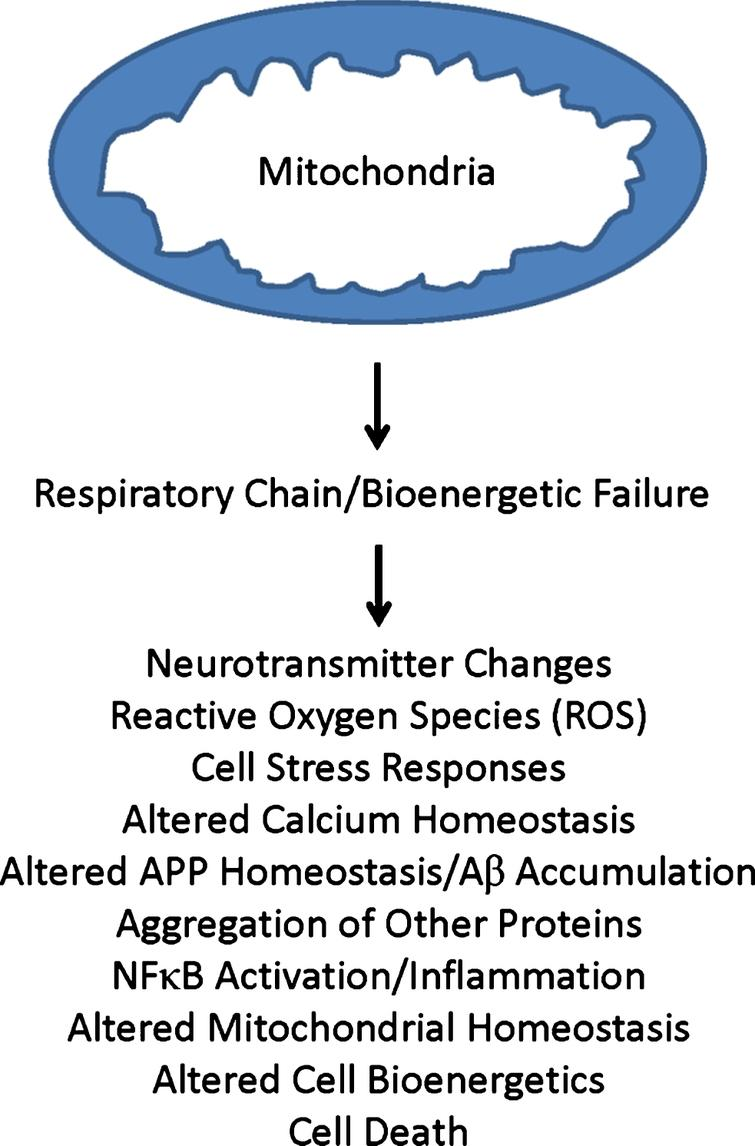 Primary mitochondrial cascade. A primary mitochondrial cascade is incompatible with the amyloid cascade hypothesis. Under this scenario, impaired mitochondrial function and associated bioenergetic changes alter Aβ homeostasis and lead to an accumulation of Aβ. Aβ may or may not in turn contribute to the development of other AD-associated functional changes and pathologies.