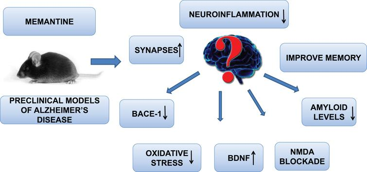 Memantine improve preclinical Alzheimer's disease neuropathology though increasing BDNF levels, synapses, improving cognition, decreasing neuroinflammation, BACE-1 blockade, and NMDA receptor inhibition.