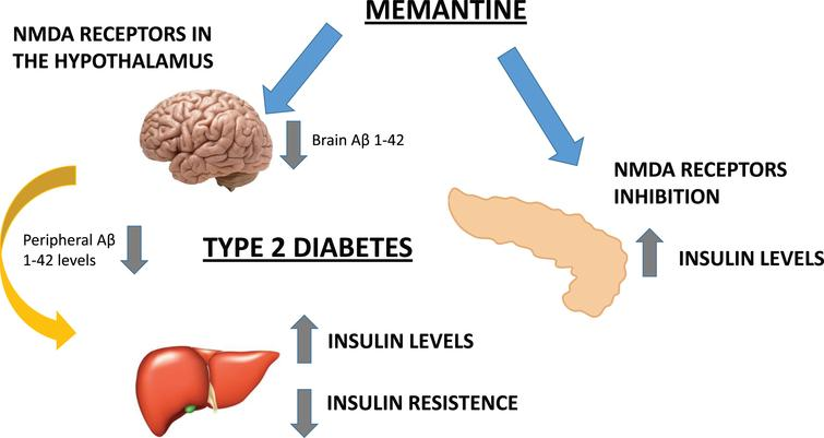 We hypothesized that the potential beneficial metabolic effects of MEM are mediated by the inhibition of peripheral (pancreatic) NMDAR and the blockade of hypothalamic Aβ1-42 levels. Therefore, AD could be a cognitive disorder associated to metabolic alterations both in central (insulin receptors) and peripheral areas.
