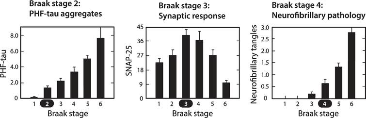 Molecular changes in neocortex by Braak staging. Proteolytically stable PHFs are present in neocortex from Braak stage 2 onwards (A); levels of SNAP-25 (as well as synaptophysin and syntaxin, not shown) increase significantly at Braak stage 3 and decline only after Braak stage 5 (B); significant numbers of neurofibrillary tangles are not observed until Braak stage 4 and beyond (C). Measures determined for frontal and temporal cortices. Source: Adapted from Mukaetova-Ladinska et al., Am J Pathol 157, 623-636, 2000, with permission of Elsevier.