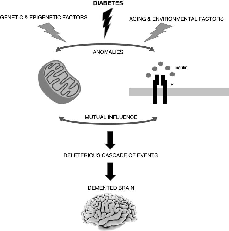 The brain is highly vulnerable to mitochondrial defects since neurons rely almost exclusively in the mitochondrial oxidative phosphorylation system to obtain ATP to fulfill their high energy needs. Accumulating evidence shows that mitochondrial alterations caused by diabetes can contribute to neurodegenerative events such as Alzheimer's disease (AD). However, it remains uncertain whether defective mitochondria are the initiating defect or secondary to altered insulin signaling. In fact, both insulin signaling and mitochondria defects can affect each other. It is also important to note that sporadic AD is a multifactorial condition that depends on the complex interplay between environmental, genetic and epigenetic factors. IR, insulin receptor.