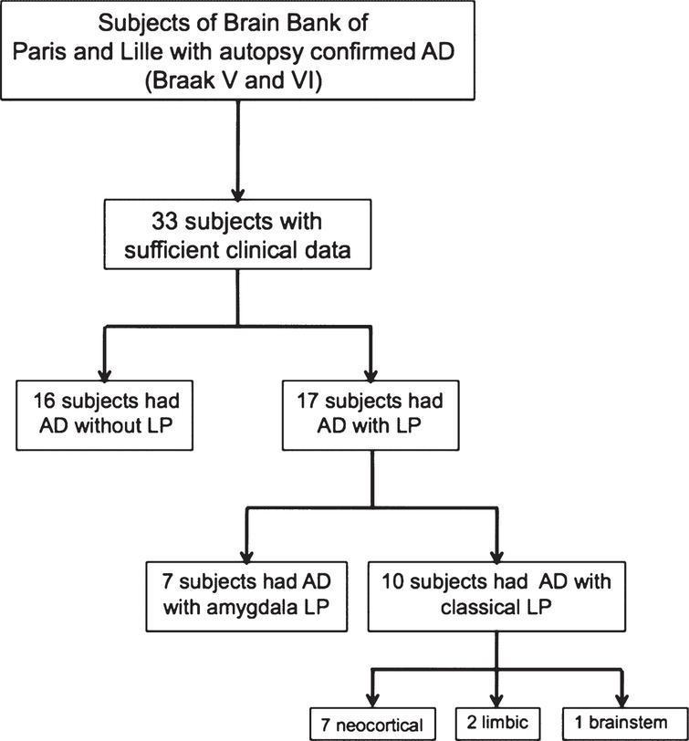 Flow chart. AD, Alzheimer disease; LP, Lewy pathology.