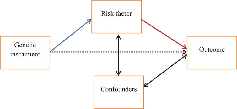 Schematic of the principles of Mendelian randomization. Mendelian randomization can be used to test for a causal relationship between a risk factor and outcome, indicated here with the red arrow. A genetic instrument (e.g., a single nucleotide polymorphism) associated with the risk factor (blue arrow) can be used as an instrumental variable to effectively randomly assign individuals to exposure groups. Reverse causation can be excluded as it is not possible for the outcome to influence a genotype which is established at conception. One important assumption is that there is no association between the genetic instrument and the outcome except via the risk factor (i.e., the dashed arrow does not exist).