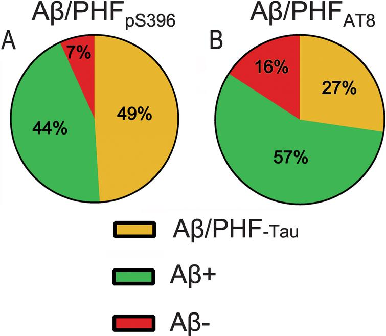 Pie charts showing the percentages of labeled plaques in double immunostaining studies: Aβ/PHFpS396 (A) and Aβ/PHFAT8 (B) combinations are shown. Both analyses displayed a higher proportion of plaques showing Aβ-ir and a much-reduced portion of negative Aβ plaques.