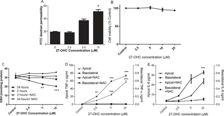 The effect of 27-OHC on endothelial barrier permeability. HMVEC cells were seeded in Transwell inserts for 2 weeks before treating 27-OHC at 2.5, 5 or 10μM for further 24 h with or without 3mM NAC. Barrier integrity (A), viability (B), Intracellular GSH (C; at 2 and 24 h) and secreted TNF-α and IL-6 levels (D and E) were measured. **p<0.01, ***p<0.001, n=3.
