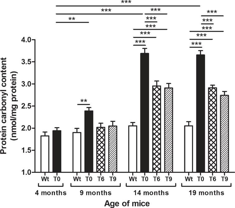 Effect of dietary walnut supplementation on protein oxidation in AD-tg mice. Protein oxidation was assessed as protein carbonyl content in the liver tissues. Diet with walnuts was fed to AD-tg mice from the age of 4 months for a period of 5, 10, or 15 months, i.e., until the age of 9, 14, or 19 months. Data are represented as the mean±SEM. Wild-type mice on control diet (Wt), AD-tg on control diet (T0), and AD-tg mice on diet containing 6% walnuts (T6) and 9% walnuts (T9). *p < 0.05, **p < 0.01, and ***p < 0.001.