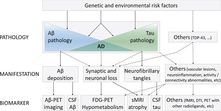 Hypothetical model illustrating the links between the main AD biomarkers and the underlying neuropathological processes. In this multidetermined perspective of the disease, Aβ and tau pathologies appear as at least partly independent processes, under the influence of genetic and environmental factors, and interact to lead to AD disease. Other neuropathological processes, some of which are still unknown, are likely also involved in the physiopathology of the disease. Adapted from [21, 22].