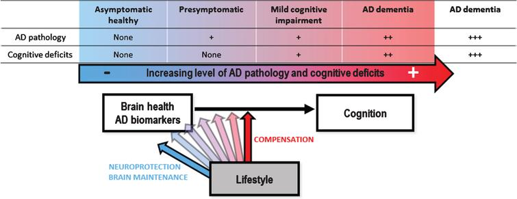 Schematic theoretical representation of the differential expression of reserve mechanisms (neuroprotection versus compensation) across the spectrum from cognitively normal healthy adults to AD dementia. We propose that neuroprotection and brain maintenance predominates in healthy elderly while compensation processes predominate as AD progresses to dementia (probably up to a certain stage where compensation is not possible anymore). [54, 55].