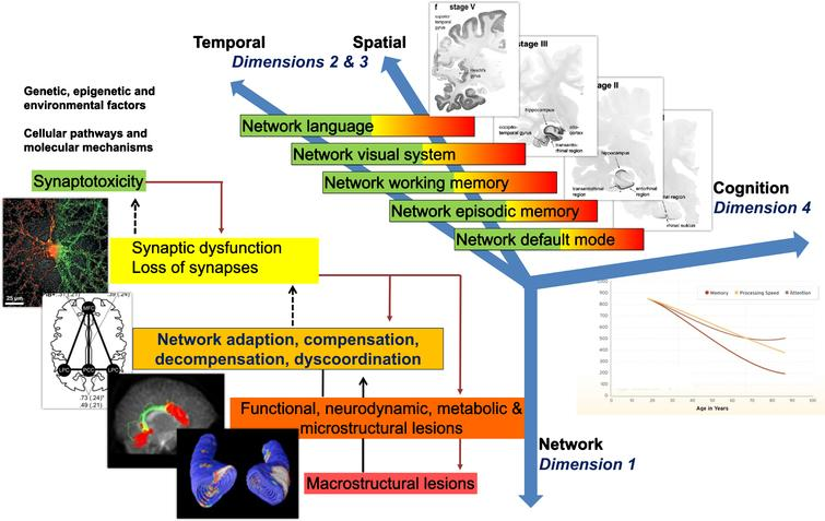 "Model of non-linear dynamic temporo-spatial progression of neural network disintegration and complex brain systems failure in relation to pathophysiology of AD. Four dimensions of pathophysiological processes in AD. Dimension 1 occurs at the level of neuronal networks (coded green to red). Dimension 1 can begin extremely early in form of synaptic dysfunction and/or synaptotoxic molecular agents, thus altering the balance of the neuronal network. Dimension 2 & 3 can be regarded as the temporal and spatial spreading from almost exclusively default mode to episodic memory networks to temporal, parietal and frontal neocortical associative areas responsible for working memory, language and/or visual processes. Every one of these complex systems can experience a variable degree of decompensation (see Dimension 1), from adaptation to compensation to massive decompensation and widespread disorganization. Dimension 4 is essentially the integration of Dimensions 1 and 2 and 3 into late-stage clinically symptomatic and syndromatic cognitive and later behavioral and psychopathological dysfunction and decline. It is therefore clear how this complex, multi-scale and multilayer association of networks can be partially robust to ""insults"" if sufficient compensatory mechanisms are in place, but also extremely and randomly fragile if adaptation and compensation fails at any level. Sufficient decompensation in Dimension 1 will turn into a malfunction in Dimension 2 and 3 and, in turn, substantial decompensation in Dimension 2 and 3 will turn into malfunction in Dimension 4 (i.e., mild cognitive impairment, clinical dementia syndrome). AD, Alzheimer's disease."