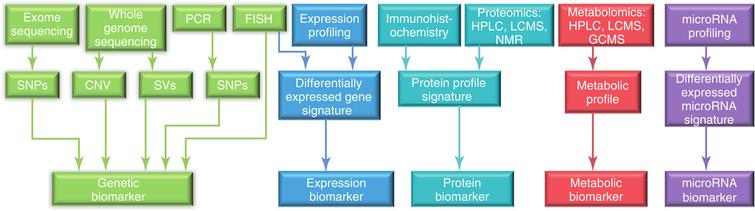 Overview of the currently available technologies and the resulting biological marker categories used for biomarker discovery in preclinical and clinical research. CNV, copy number variations; FISH, fluorescence in situ hybridization; GCMS, gas chromatography mass spectrometry; HPLC, high-performance liquid chromatography; LCMS, liquid chromatography– mass spectrometry; NMR, nuclear magnetic resonance; PCR, polymerase chain reaction; SNPs, single nucleotide polymorphisms; SVs, structural variations. Reproduced with permission from [79].