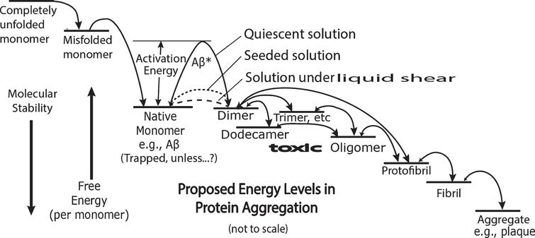 "Energy diagram representing a highly simplified, symbolic overview of two processes, protein folding and amyloid cascade aggregation proceeding from native monomer through the formation of toxic oligomers, fibrils, to aggregates. The free energy level scale is arbitrary and not to scale. The free energy and molecular stability arrows are arbitrary in size but not direction. As indicated with the vertical arrows on the left, the stability of the monomer increases with decreasing free energy. The heights of curved arrows above straight line energy levels represent speculative comparative activation energies. The relative sizes of the arrow heads in the double headed arrows indicate speculative relative rates in the equilibrium between each of the two chemical species. The dashed line between monomer and dimer represents the free energy of the monomer as it is transformed in a non-equilibrium shear energy process probably from a predominantly alpha to a predominantly cross beta conformation. The dotted line represents the lowered activation energy when exogenous oligomers are added to monomer solutions and catalyze further aggregation. The single line energy labels ""Dimer"", ""Trimer, etc."" do not reveal the complexity of different possible energy levels and conformations of in-register and out-of-register conformations. The ""(Trapped. Unless…)"" label under the ""Native Monomer"" energy level implies there are means (e.g., shearing and seeding) by which the very high activation energy barrier can be circumvented and aggregation commences."