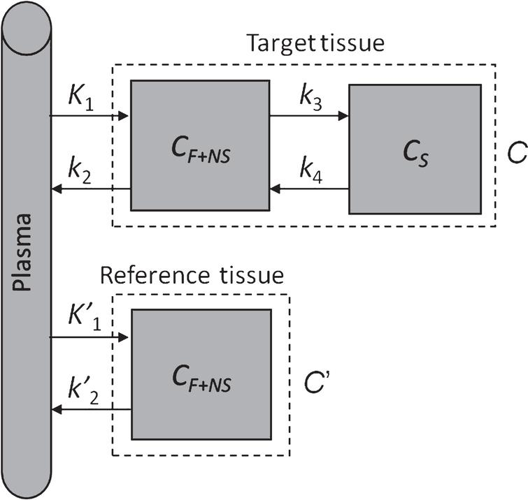 Two-tissue compartment model with reference region. CF+NS is the concentration due to free and nonspecific binding, CS is the concentration due to specific binding.