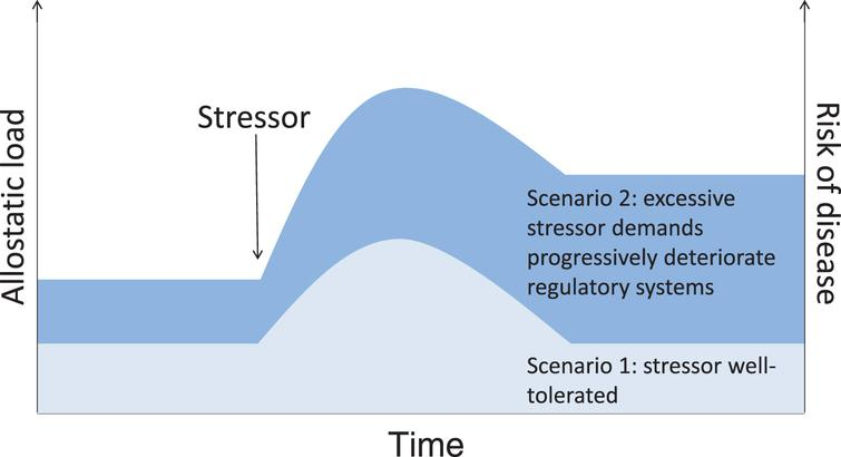 Allostatic load scenarios. Both intrinsic (e.g., stress reactivity, resilience, existing disease states) and extrinsic (e.g., prior and concurrent exposure to other psychosocial, physical, or chemical stressors) factors will interact to determine to what extent stressor exposure contributes to physiological dysfunction, or allostatic load, and increases the risk of disease.