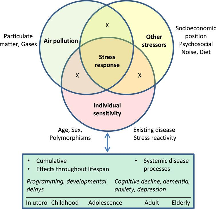 """Stress response as an integrator of effects of chemical and non-chemical stressors and individual sensitivity on brain health across the life course. Exposure to air pollution occurs in the context of other exposures, including stressors associated with socioeconomic position such crowding, crime, noise, and other hazards. Deleterious effects of exposure to chronic stressors may accumulate across the life course, and in turn may further increase vulnerability to subsequent exposures. Effects include impacts on fetal development, programming of future stress reactivity and disease susceptibility, and cumulative dysregulation of systemic neuroendocrine, cardiovascular, inflammatory, and metabolic processes that collectively contribute to disease. """"X"""" represents interactions among factors."""