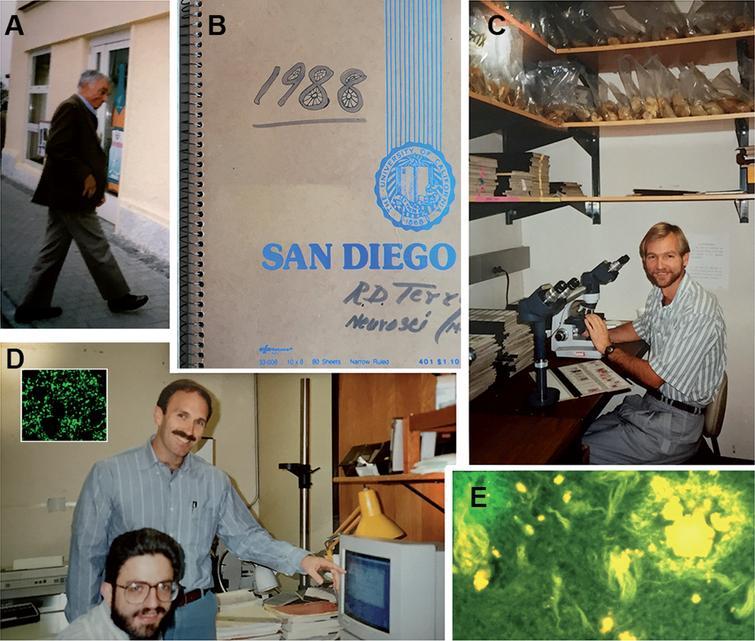 The laboratory of Neuropathology at UCSD in the late 1980s. Bob arriving for a meeting (A), Bob's notebook from 1988 (B), Larry Hansen at the Alzheimer's Disease Research Center brain bank analyzing the samples (C), Richard DeTeresa and Eliezer Masliah at the digital system analyzing the first laser confocal images of synapses (synaptophysin immunolabeled) from an Alzheimer's disease brain (D), Bob Terry's classical Thioflavine S image of plaques and tangles (E).