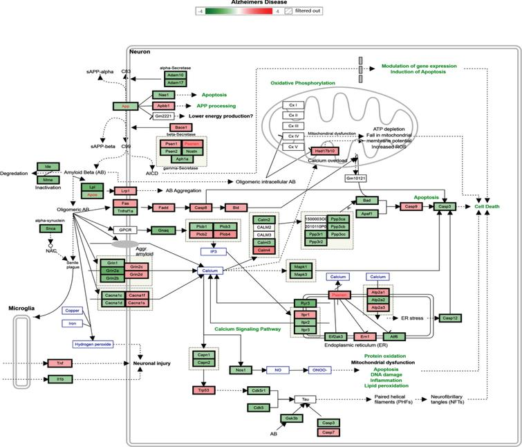 Alzheimer's disease pathway with regulated genes after 6 months' supplementation of TRF. *The green box indicates downregulated genes and the red box indicates upregulated genes.