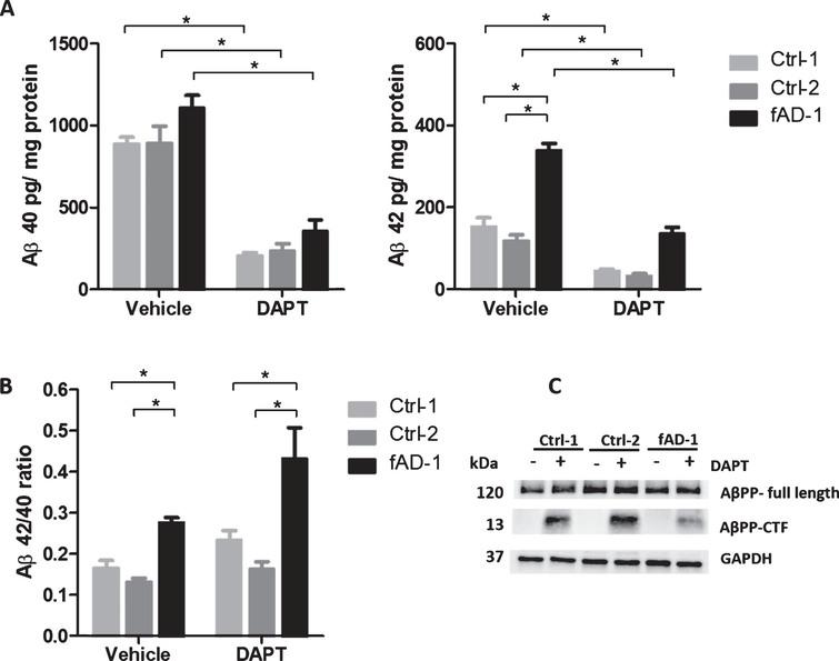Pharmacological modulation of amyloid secretion and AβPP processing by DAPT treatment. A) ELISA analyses of Aβ40 and Aβ42 endogenously secreted into conditioned media from controls (Ctrl-1 and Ctrl-2) and fAD cell lines treated with vehicle (0.1% DMSO) or with 1 μM DAPT for 48 h. Data normalized to total mg of protein. B) Ratio between Aβ42 and Aβ40 secreted from controls (Ctrl-1 and Ctrl-2) and fAD cell lines±treatment with 1 μM DAPT for 48 h. C) Representative western blot analysis of total lysates showing the accumulation of AβPP-CTF upon treatment with 1 μM DAPT for 48 h; In A and B, two-tailed t-tests were performed when comparing different conditions (vehicle and DAPT) within the same cell line, while one-way ANOVA performed with Tukey's multiple comparisons test was applied to find differences between the cell lines. *p<0.05; Error bars=SEM; ELISA and WB measurements were performed at least as biological triplicates.
