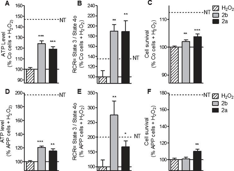 2a and 2b pre-treatment ameliorate ATP levels, mitochondrial respiration (RCR) and cell survival after oxidative insult in control (Co) and APP cells. Co and APP cells were pre-treated with the TSPO ligand 2b or 2a for 24 h and then exposed to H2O2 (500 μM for 3 h). H2O2 treatment induces a decrease of the ATP level, RCR as well as the cell survival both cell lines. The TSPO ligand 2b or 2a improved the ATP level, RCR and cell survival. Values represent the mean±SEM; n=4–6 replicates of three independent experiments normalized to Co or APP cells treated with H2O2. One-way ANOVA and post hoc Dunnett's multiple comparison test versus Co or APP cells treated with H2O2, *p<0.05, **p<0.0001, ***p<0.001.