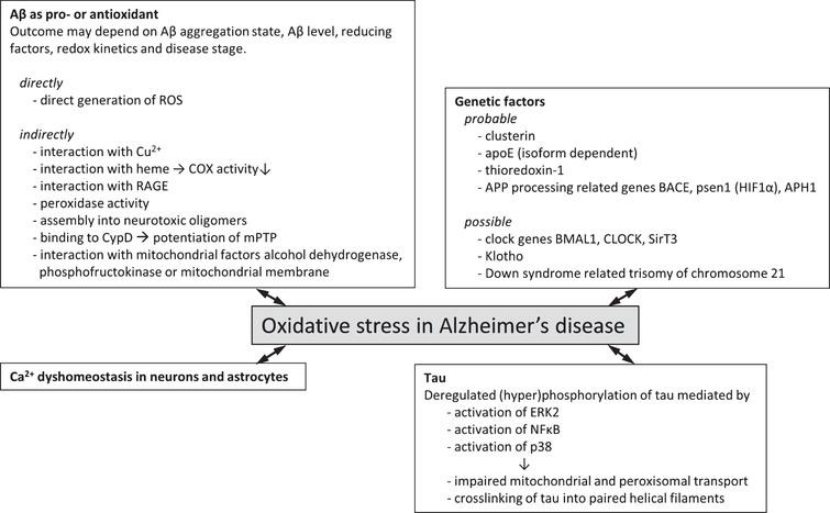 Genetic factors and molecular mechanisms of oxidative stress in Alzheimer's disease. Overview of probable (experimental evidence available in literature) and possible (no direct experimental evidence available) genetic factors that associate oxidative stress with Alzheimer's disease. Various molecular mechanisms by which oxidative stress and Alzheimer's disease may be associated have been described. These often involve the two hallmark proteins Aβ and tau and effects may be directly involving the generation of ROS or indirectly via interaction with various cellular factors giving rise to increased ROS generation or lowered endogenous antioxidant capacity.
