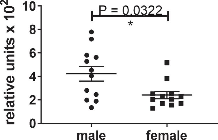 Differential levels of insoluble tau aggregates in untreated male and female htau mice at 6.5 months of age. These significant results show that the control group of male htau mice developed about twice the level of insoluble tau aggregates as the female control group at the end of the study. This justified the separate analyses of the male mice which developed enough insoluble tau to determine the efficacy of the lead compound. The levels of Sarkosyl-insoluble tau aggregates were determined by ELISA for total tau formatted with capture antibody DA31 (pan-tau) and reporter Ab DA9 (pan-tau) conjugated to HRP. The values were normalized to total tau in the heat stable fractions of forebrain.