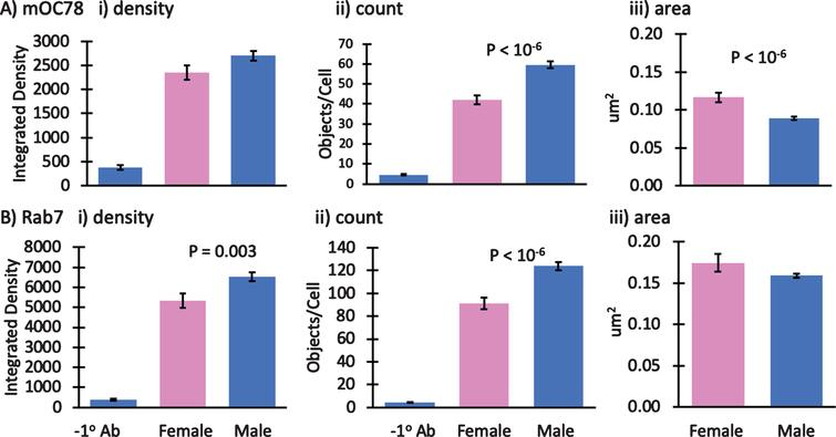 Small effect of mouse gender on mOC78 and Rab7 immunoreactivity. Male to female comparisons of A) mOC78 and B) rab7 immunoreactivity in neurons from 4-month-old mice. i) integrated density; ii) object counts/cell; iii) area per object. We have reported results from both male and female mice. To determine how dependent the results were on gender, in one experiment we explicitly compared mOC78 and Rab7 immunoreactivity in neurons from a female to a male 4-month-old 3xTg-AD mouse. A shows an insignificant 15% increase in mOC78 immunoreactive density per cell in the male compared to the female. The object counts per cell were 43% higher in the male with 33% smaller areas, compared to the female. B shows Rab7 immunoreactive density per cell was 22% higher in the male compared to the female. The object counts per cell were 36% higher in the male with only 6% smaller areas, compared to the female. Colocalization of mOC78 with Rab7 was 0.83 for both sexes. Since mOC78 male measures were increased over females in proportion to the mass effect of sex on Rab7, these results suggest that sex is not a major factor in the iAβ accumulation of mOC78 immunoreactivity. File 171013.