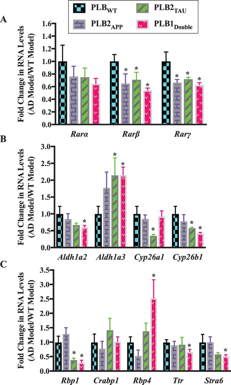 Gene expression analysis of RA signaling system genes in 3-month-old half brains of different AD and FTD transgenic mouse models. RNA was isolated from half brains of AD mouse models and analyzed by reverse transcription followed by qPCR. A) RA receptors, B) RA enzymes, and C) RA binding proteins. RNA levels were standardized with respect to the appropriate reference RNA controls in each model and compared to levels in wild type mouse models (WT) which were set at 1. Data represent fold change in the mean of RNA levels of at least six mouse models. Error bars indicate standard error of the mean (SEM) (*p≤0.5, one-way ANOVA with Newman-Keuls multiple comparison test).
