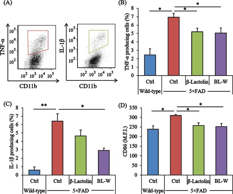 Effects of β-lactolin on inflammation and microglial activation in 5×FAD mice. Transgenic 5×FAD and wild-type male mice aged 2.5 months were fed a diet with or without 0.05% w/w β-lactolin or 5% w/w β-lactolin-rich whey enzymatic digestion (BL-W) for 3.5 months. A) Characterization of CD11b-positive microglia producing TNF-α and IL-1β by flow cytometry. B, C) The percentage of TNF-α or IL-1β-producing cells to CD11b-positive cells. D) Expressions of CD86 in CD11b-positive cells. M.F.I. is the mean fluorescent intensity. Data are presented as mean±SEM values (5 mice per group). p-values shown in the graph were calculated by one-way ANOVA followed by the Tukey–Kramer test. *p<0.05, **p<0.01.
