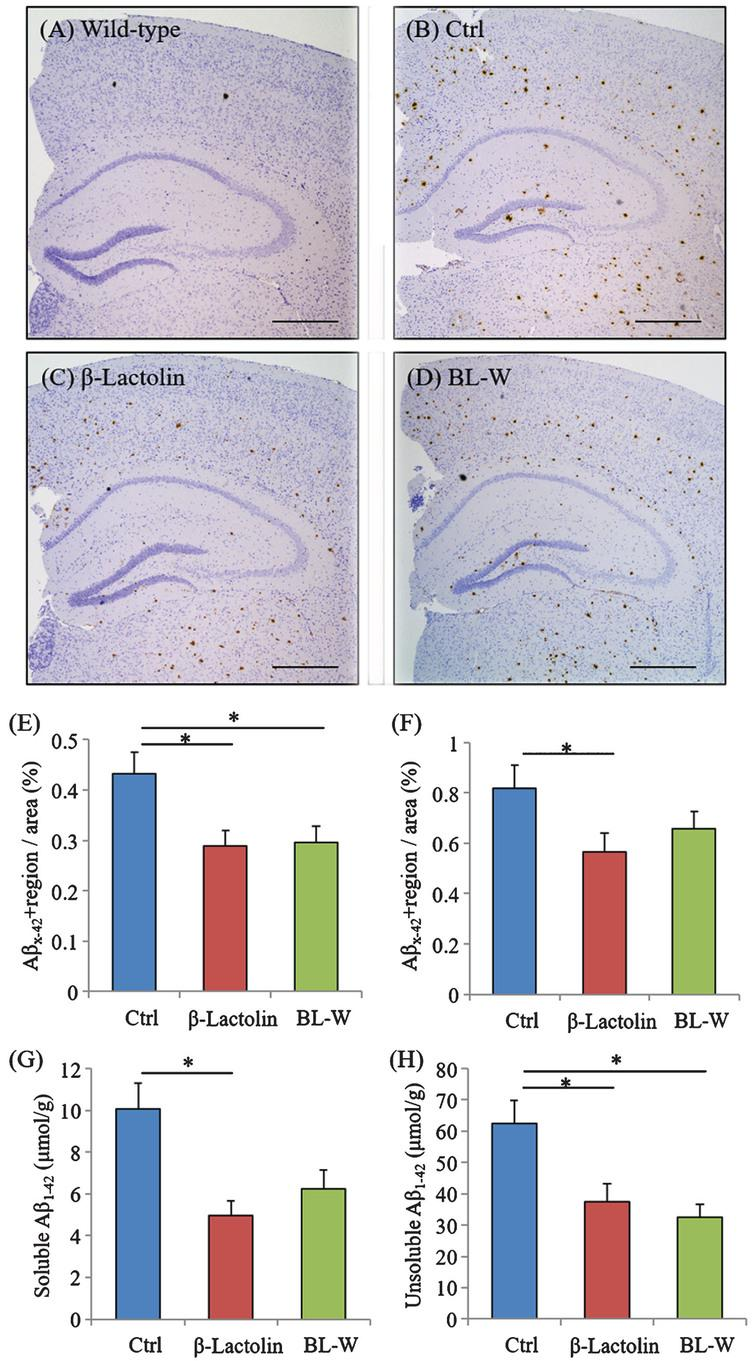 Effects of β-lactolin on Aβ deposition in 5×FAD mice. Transgenic 5×FAD and wild-type male mice aged 2.5 months were fed a diet with or without 0.05% w/w β-lactolin or 5% w/w β-lactolin-rich whey enzymatic digestion (BL-W) for 3.5 months. A-D) Representative immunohistochemistry images for Aβ1-42 in wild-type mice and transgenic mice with or without β-lactolin or β-lactolin-rich whey enzymatic digestion. Scale bars, 400μm. E, F) Percentage of the Aβ1-42-positive area detected by immunohistochemistry in the cortex and hippocampus in transgenic control mice (Ctrl) and transgenic mice fed a diet containing β-lactolin or BL-W. G, H) The levels of TBS-soluble or TBS-insoluble/TBS-T soluble Aβ1-42 in the frontal cortex. Data are presented as means±SEM (sample size: wild-type mice, 10; control transgenic mice, 10; transgenic mice fed with β-lactolin, 11; or transgenic mice fed with BL-W, 10). p-values shown in the graph were calculated by one-way ANOVA followed by the Tukey–Kramer test. *p<0.05.