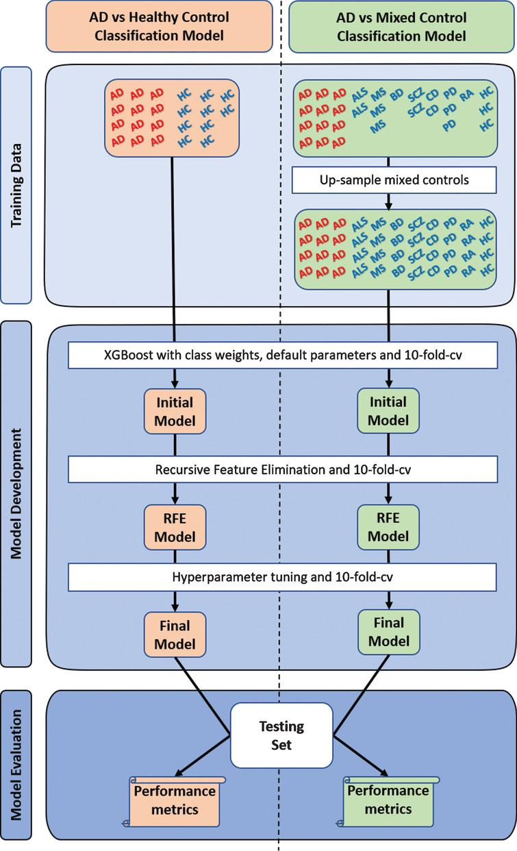 """Overview of study design. Two types of XGBoost classification models were developed, optimized, and evaluated. The first (""""AD vs Healthy Control"""") used the typical approach, training in Alzheimer's disease (AD) and cognitively healthy controls (HC), while the second (""""AD vs Mixed Control"""") was trained in AD and a mixed controls group. The mixed control group consisted of Parkinson's disease (PD), multiple sclerosis (MS), amyotrophic lateral sclerosis (ALS), bipolar disorder (BD), schizophrenia (SCZ), coronary artery disease (CD), rheumatoid arthritis (RA), chronic obstructive pulmonary disease (not represented in the figure), and cognitively healthy subjects. The individual groups within the mixed controls were upsampled with replacement to avoid sampling biases during model development. To account for the randomness, a thousand """"AD vs Healthy Control"""" and a thousand """"AD vs Mixed Control"""" classification models were developed and evaluated. cv, cross-validation; RFE, recursive feature elimination."""