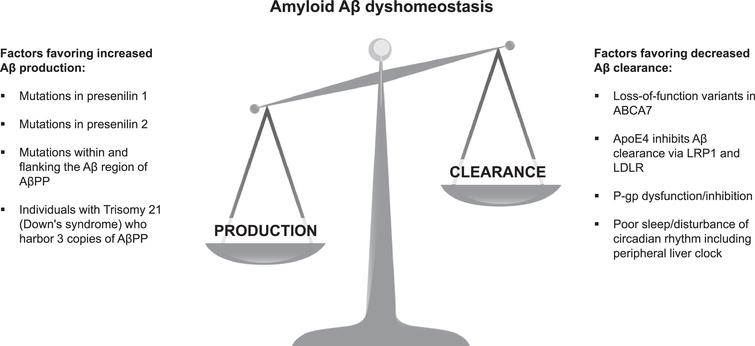 Some factors altering the balance between amyloid Aβ production and clearance leading to dyshomeostasis. Peripheral clearance can remove 40–50% of Aβ burden in the brain [25, 26]. Aβ, amyloid-β; AβPP, amyloid-β protein precursor, LRP1, low-density lipoprotein receptor-related peptide 1; LDLR, low-density-lipoprotein receptor; P-gp, P-glycoprotein.