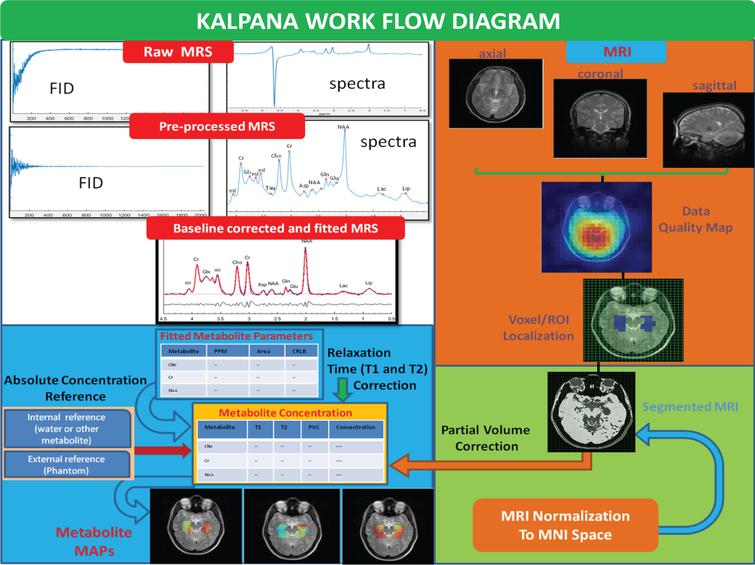 An illustrative representation of the multi-nuclei data processing, metabolic quantitation, and outputs generated using the KALPANA package.
