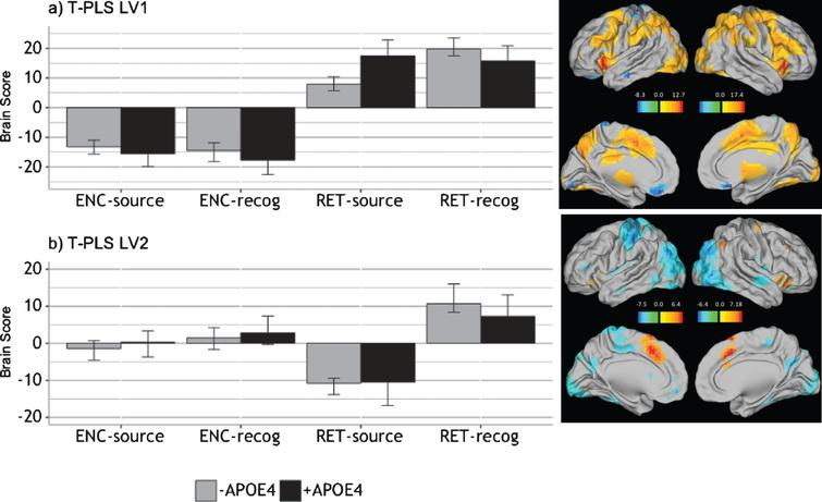 Design salience plot and singular image representing brain activity patterns by condition for (a) LV1 and (b) LV2, revealed by the T-PLS analysis. LEFT: Error bars on design salience plots represent 95% confidence intervals. Positive brain scores indicate conditions in which activity was greater in positive brain salience regions (shown in red in the singular images) and vice versa. Negative brain scores indicate conditions in which activity was greater in negative brain salience regions (shown in red in the singular images) and vice versa. RIGHT: Singular images were thresholded at a bootrstrap ratio of±3.5, p < 0.001. Red brain regions represent positive brain saliences; blue regions represent negative brain saliences. Activations are presented on template images of the lateral and medial surfaces of the left and right hemispheres of the brain using Caret software (http://brainvis.wustl.edu/wiki/index.php/Caret:Download).